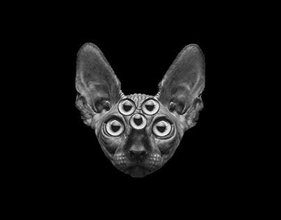 loloopop visuals | Mr. Clarinet LIVE