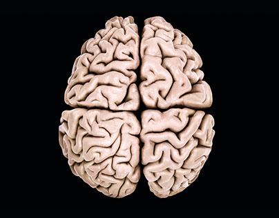 Audi: Brain