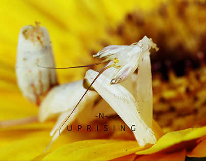 -N- Uprising