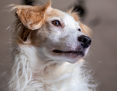 Fotografia de Pet/ Pet Photography