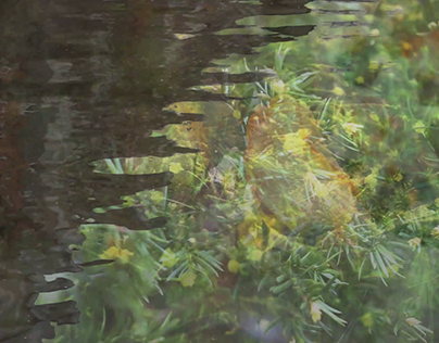 Bird&Green-Harmonica Cover of Inochi no Namae