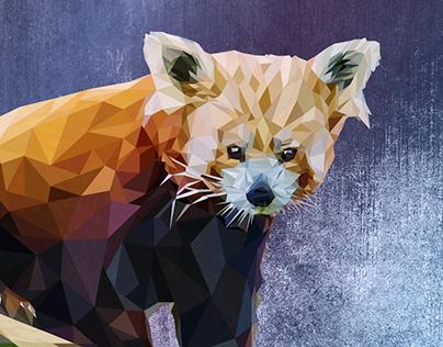 Macaroni the Red Panda, 2020