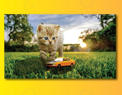 Cat Photo Manipulation