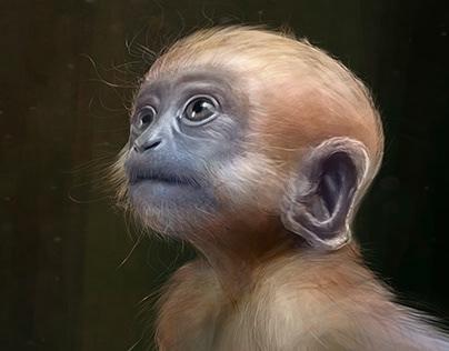 Digital Painting - Baby Monkey