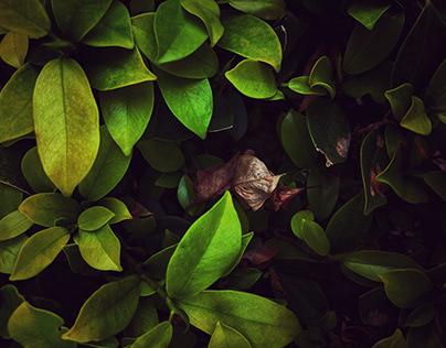 Deep Into Nature | Nature Photography