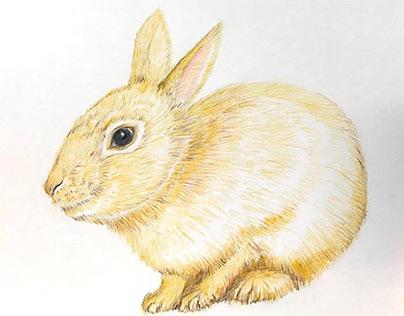 Orangey Rabbit