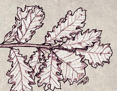 Botanical Illustrations II