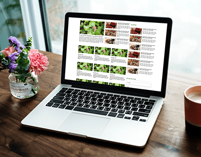 Thiết kế website Đông Y