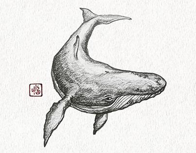 Whale (Pencil)
