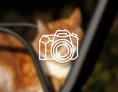 Animal photography - Majestic cat