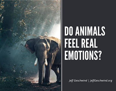 Do Animals Feel Real Emotions?