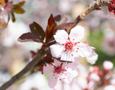 Spring High Key