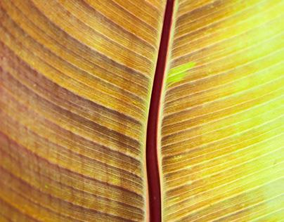 Tropical Macros