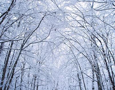 Winter + Wonderland