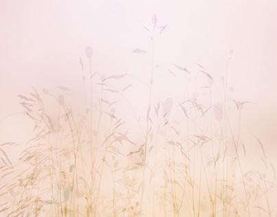 Meadow Beyond