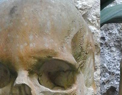 Limestone Skull