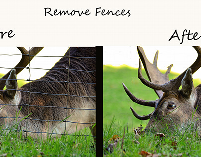 Remove Fences