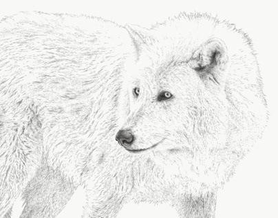 Nova, Yamnuska Wolfdog