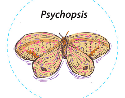 PhD Psychopsidae (infographic illustrations)