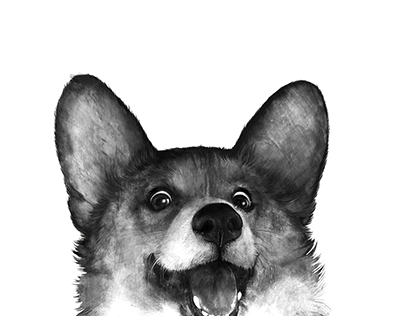 Corgi black and white dog