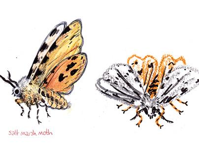 Salt marsh moth medium experimentation