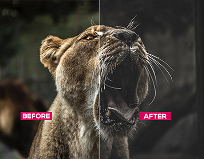 Wildlife photography editing preset