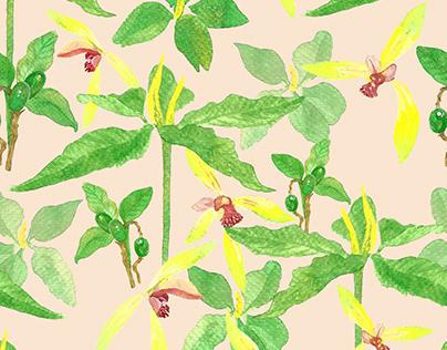 3 Jeju Plants