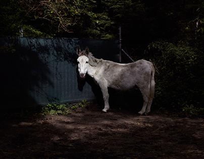 the donkeysociety