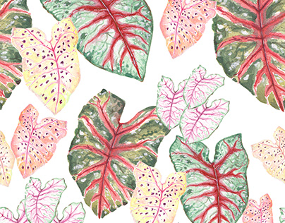 Caladium Tropical leaves _hand-painted watercolor