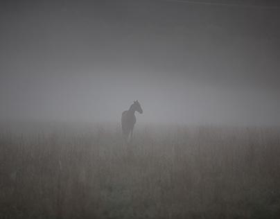 Un cheval perdu dans une brume incroyable.