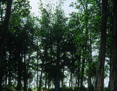 vegetation doodle Wip 001