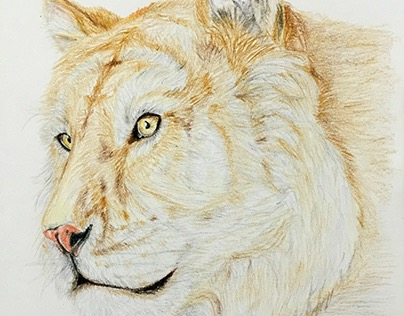 Colour pencils hand drawing