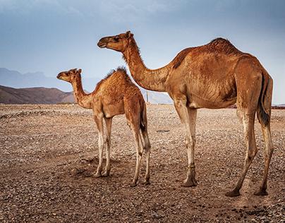 Central Oman