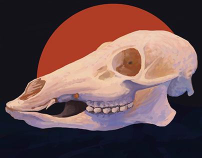 Skulls   Bunch of studies