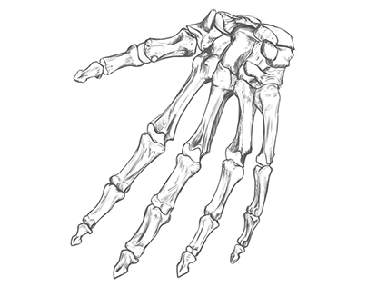 Hand bones Quick Sketch.