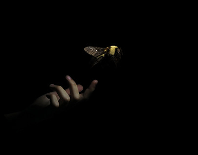 Bee (2018)