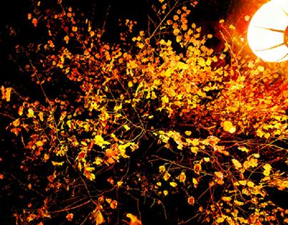 Autumn Decorations.