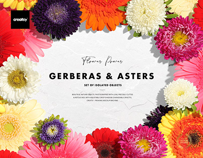 Gerberas & Asters Isolated Objects