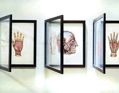Anatomical maps