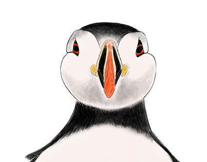 Puffin - Clown of the sea