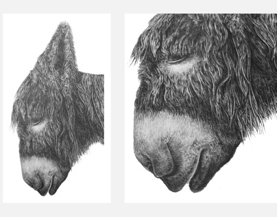 Donkey Pencil Illustration