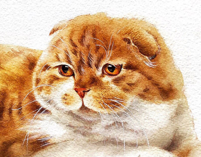 Ginger Scottish Fold Watercolour Illustration