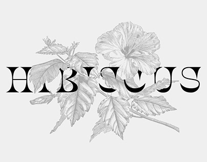 Hibiscus typeface