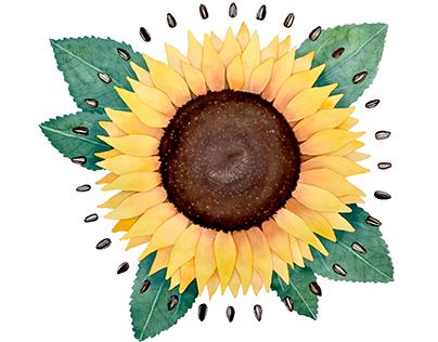 Radial Sunflower