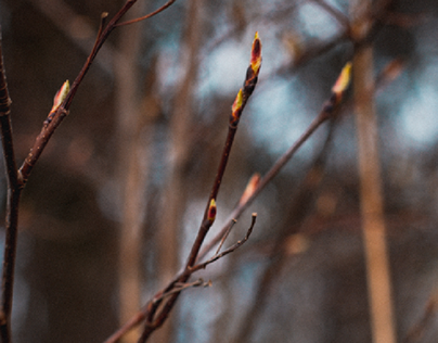spring
