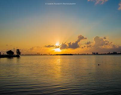 Miami Landscapes