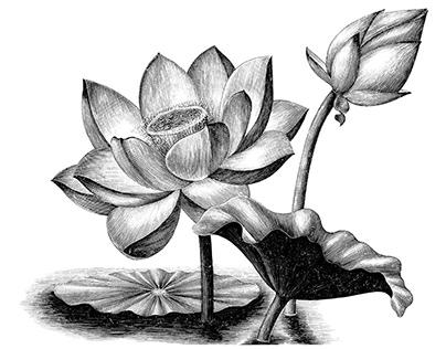 Vintage engraving illustration clip art