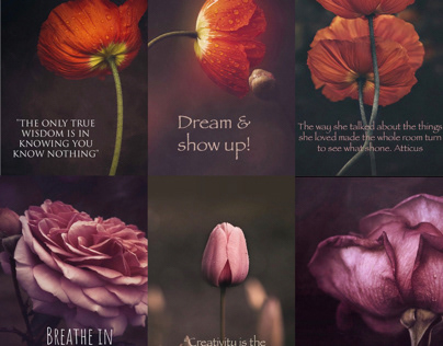 Blooms & Quotes @mdewitdaily