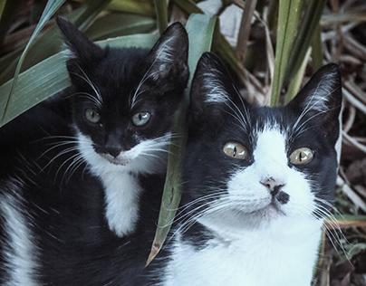 Gatos das Beiras