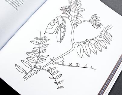 Illustrations for a cookbook